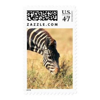 Burchell's zebra 2 postage stamp