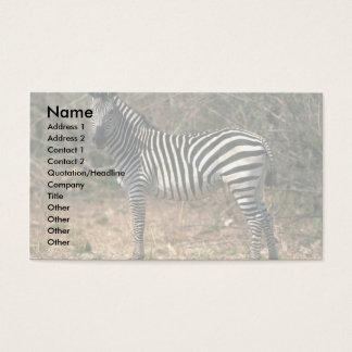 Burchell's Zebra Business Card