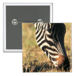 Burchell's zebra button
