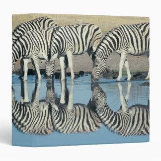 Burchells Zebra (Equus burchelli) Vinyl Binders