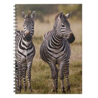 Burchell's Zebra, Equus burchellii, Masai Mara, Notebook