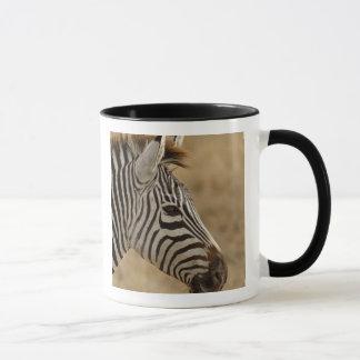 Burchell's Zebra, Equus burchellii, Ngorongoro Mug