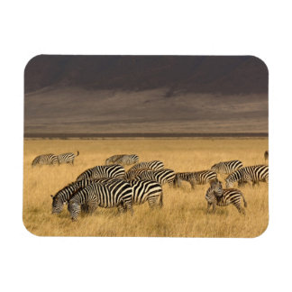 Burchell's Zebra, Equus burchellii, Ngorongoro Rectangular Photo Magnet
