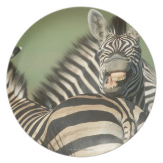 Burchell's Zebra (Equus burchellii). Tala Melamine Plate