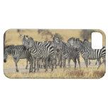 Burchell's Zebra, Equus burchellii, Tarangire iPhone SE/5/5s Case