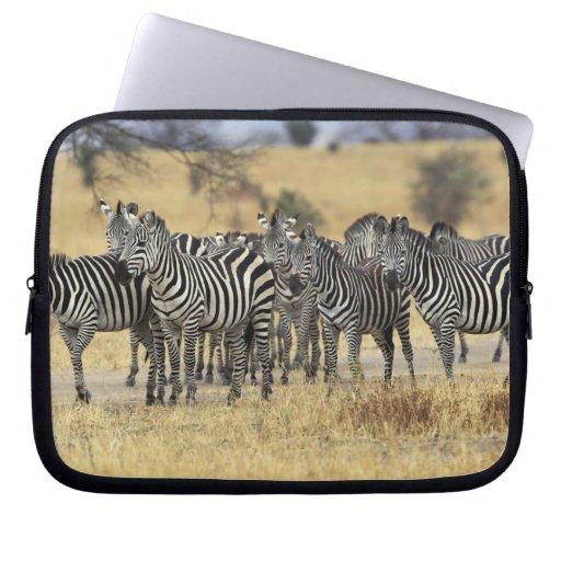 Burchell's Zebra, Equus burchellii, Tarangire Laptop Computer Sleeves