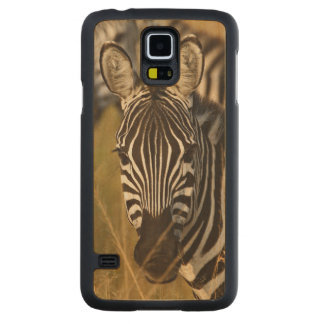 Burchell's Zebra in tall summer grass, Masai Carved Maple Galaxy S5 Slim Case