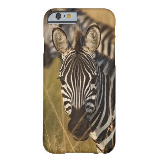 Burchell's Zebra in tall summer grass, Masai Barely There iPhone 6 Case