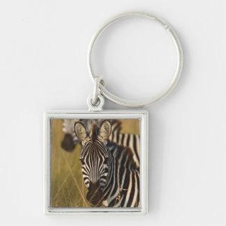 Burchell's Zebra in tall summer grass, Masai Keychain