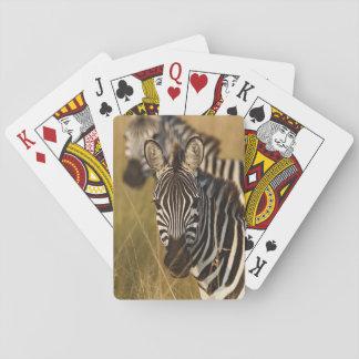 Burchell's Zebra in tall summer grass, Masai Playing Cards