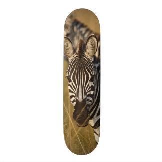 Burchell's Zebra in tall summer grass, Masai Skateboard Deck