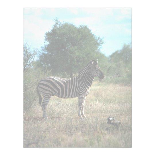 Burchell's Zebra Letterhead