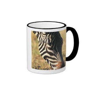 Burchell's zebra mugs
