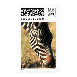 Burchell's zebra postage stamps