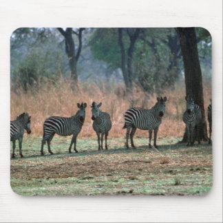 Burchell's Zebra - Small Herd Mouse Pads