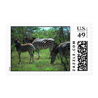 Burchell's Zebra - Small Herd Stamps