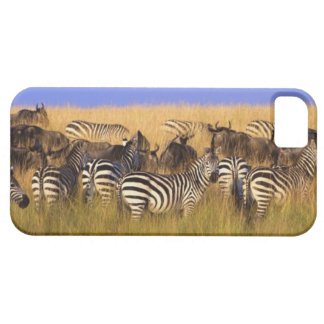 Burchell's Zebras and Wildebeest in tall summer iPhone SE/5/5s Case