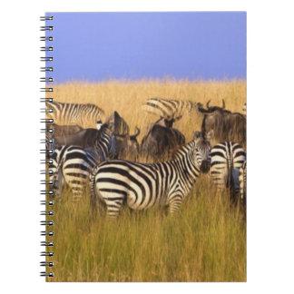 Burchell's Zebras and Wildebeest in tall summer Notebook