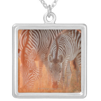 Burchell's Zebras, Equus burchelli grazing at Silver Plated Necklace