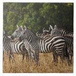 Burchell's Zebras (Equus Burchellii) as seen in Ceramic Tile