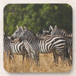 Burchell's Zebras (Equus Burchellii) as seen in Drink Coaster