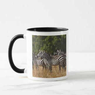 Burchell's Zebras (Equus Burchellii) as seen in Mug