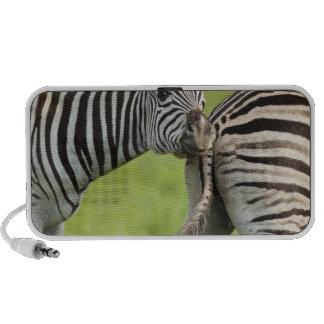 Burchell's Zebras (Equus quagga burchellii), Notebook Speakers