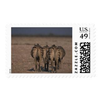 Burchell's Zebras Walking Stamp