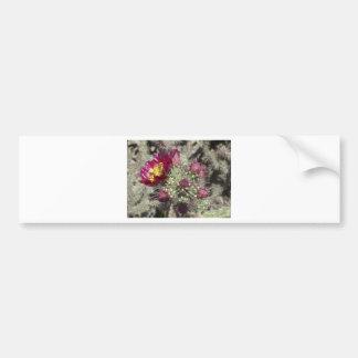 Burgundy Cactus Flowers Bumper Sticker