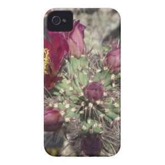 Burgundy Cactus Flowers Case-Mate iPhone 4 Cases