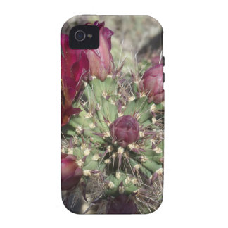 Burgundy Cactus Flowers iPhone 4 Covers