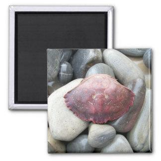 Burgundy Crab Shell Magnet