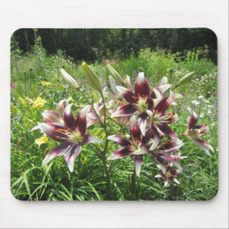 Burgundy Creme Asiatic Lilies Mouse Pad