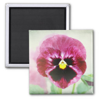 Burgundy Red Pansy Flower 2 Inch Square Magnet