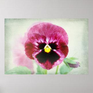 Burgundy Red Pansy Flower Print