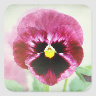 Burgundy Red Pansy Flower Stickers