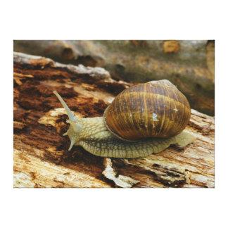 Burgundy Roman Edible Snail Helix Pomatia Canvas Print