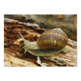 Burgundy Roman Edible Snail Helix Pomatia 5x7 Paper Invitation Card
