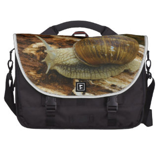 Burgundy Roman Edible Snail Helix Pomatia Laptop Bag