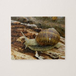 Burgundy Roman Edible Snail Helix Pomatia Puzzles