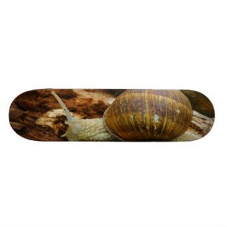 Burgundy Roman Edible Snail Helix Pomatia Skate Board
