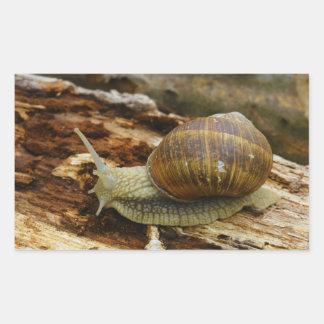 Burgundy Roman Edible Snail Helix Pomatia Rectangular Stickers