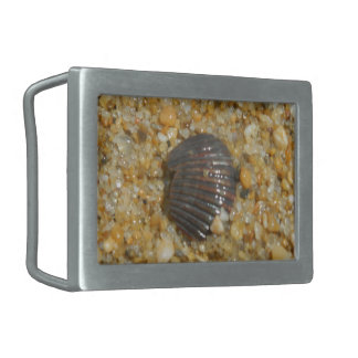 Buried Seashell Belt Buckle