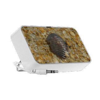 Buried Seashell Mp3 Speaker
