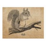 Burlap Vintage Squirrel Postcard Postcards