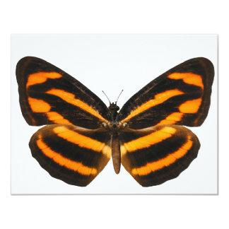 Burmese Lascar Butterfly Card