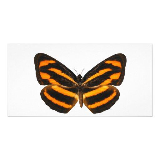 Burmese Lascar Butterfly Photo Card Template