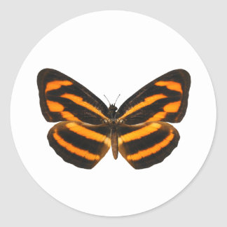 Burmese Lascar Butterfly Round Stickers