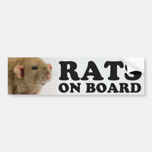 (Burmese) Rats one board Bumper Stickers