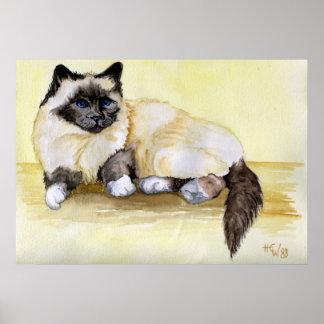 Burmese Seal Point Cat Poster